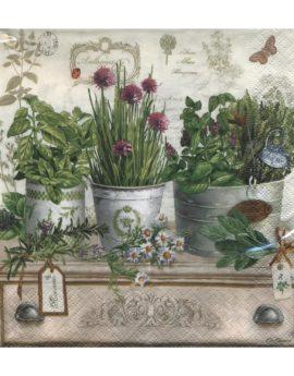 herbarium-414-rium